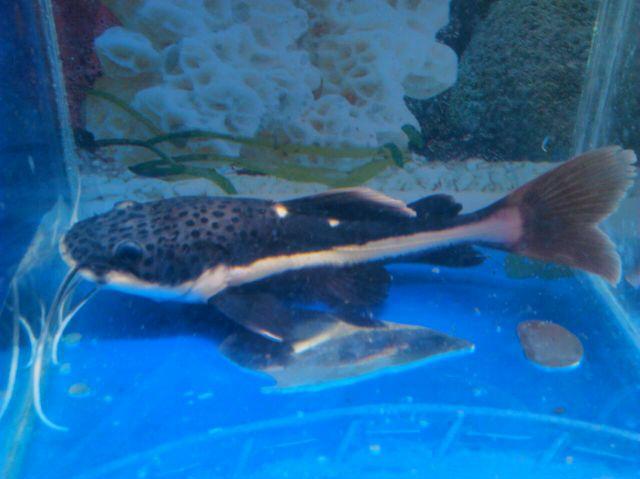macam-macam ikan hias